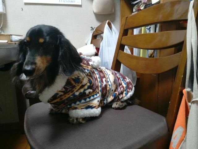 最新冬用犬の服 クリスマスバージョン 市松模様